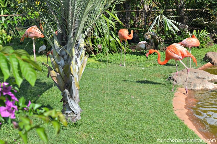 honolulu zoo flamingo