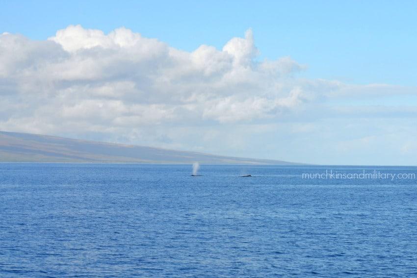 lanai-whales