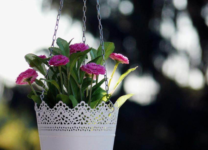 floral-967113_1920