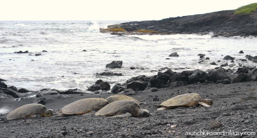 Turtles on the beach - Black sand beach - Big Island, Hawaii