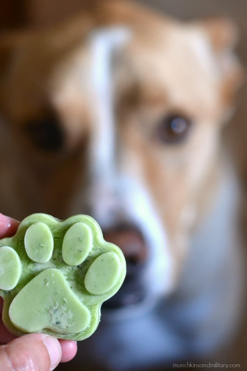 Caesar dog and frosty paw dog treat